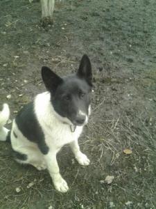 Пропала собака по кличке Байкал